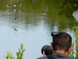 st-maarten-bird-watching-tourism