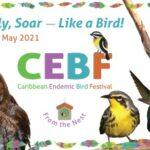 birdscaribbean18052021